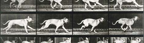 Animal-Locomotion-Dog-Running-stop-motion recortada